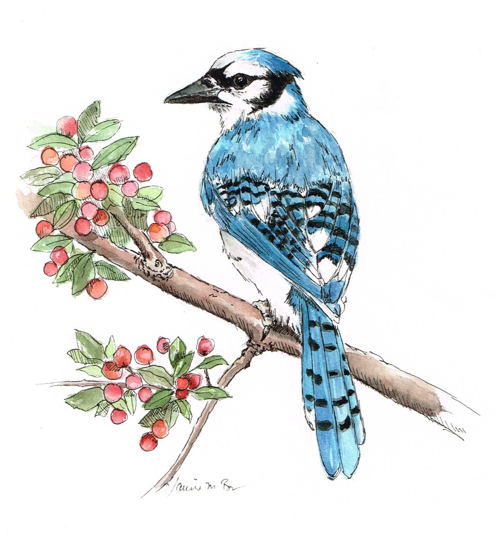 """Bluejay. Watercolor and ink on paper, 9""""x7"""""""