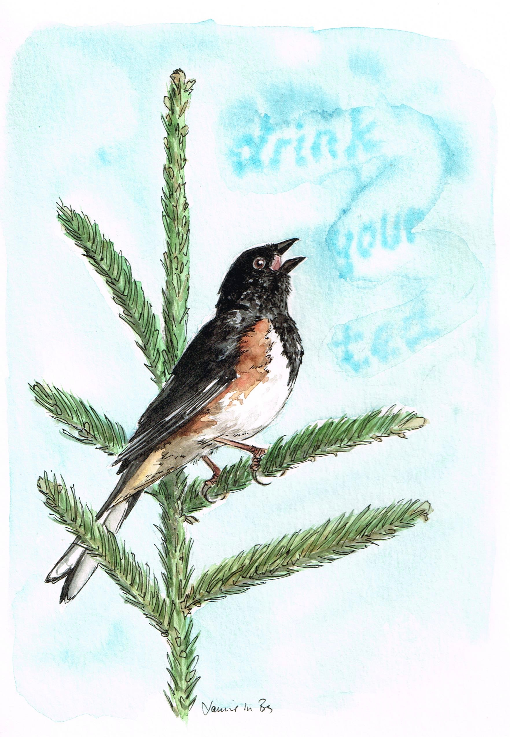 """Eastern towhee. Watercolor and ink on paper, 9""""x6"""""""