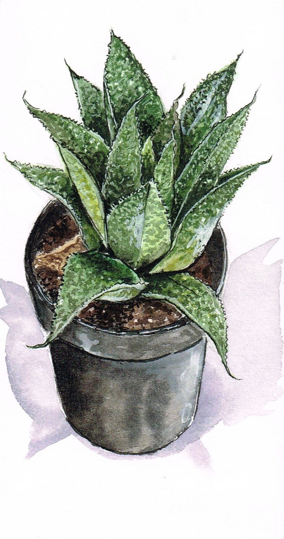 """tiny succulent, watercolor and gouache on scrap paper, about 4""""x3""""."""