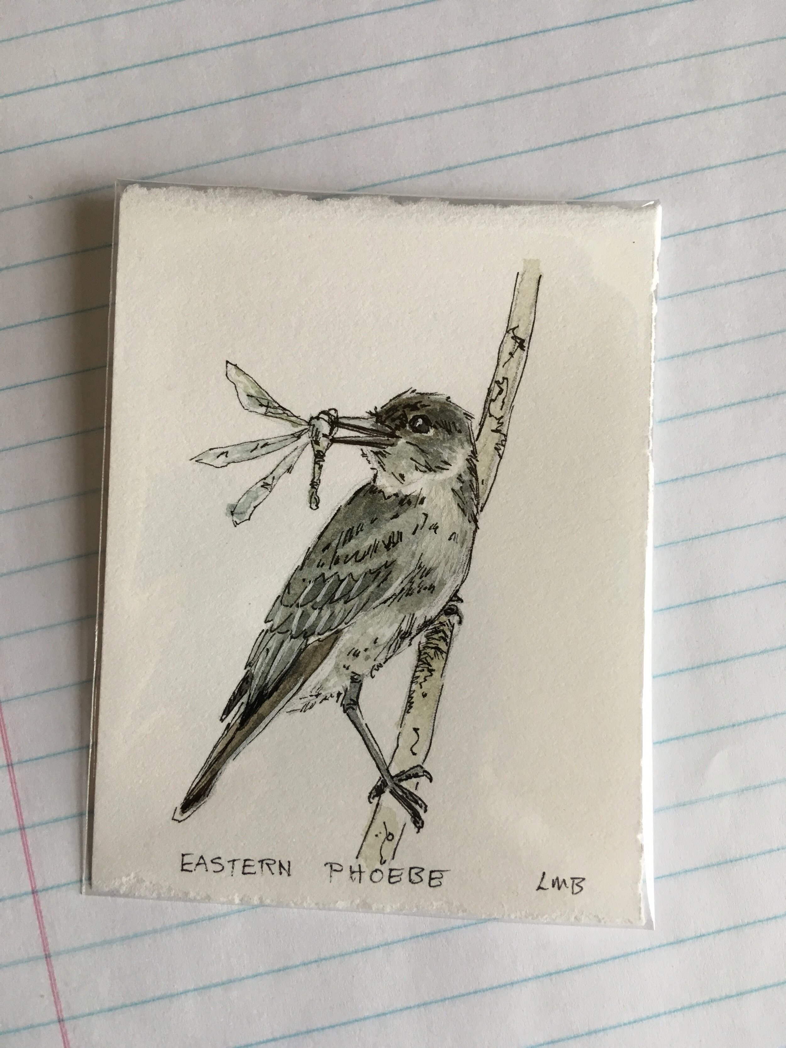 """Eastern Phoebe, about 3""""x2.5"""", watercolor and ink on scrap paper."""
