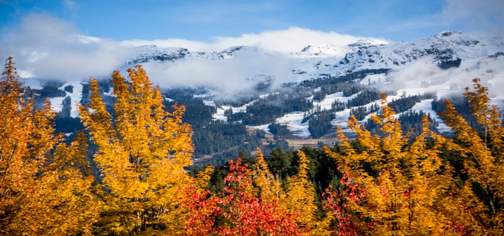 fall-snowline-whistler-1.jpg