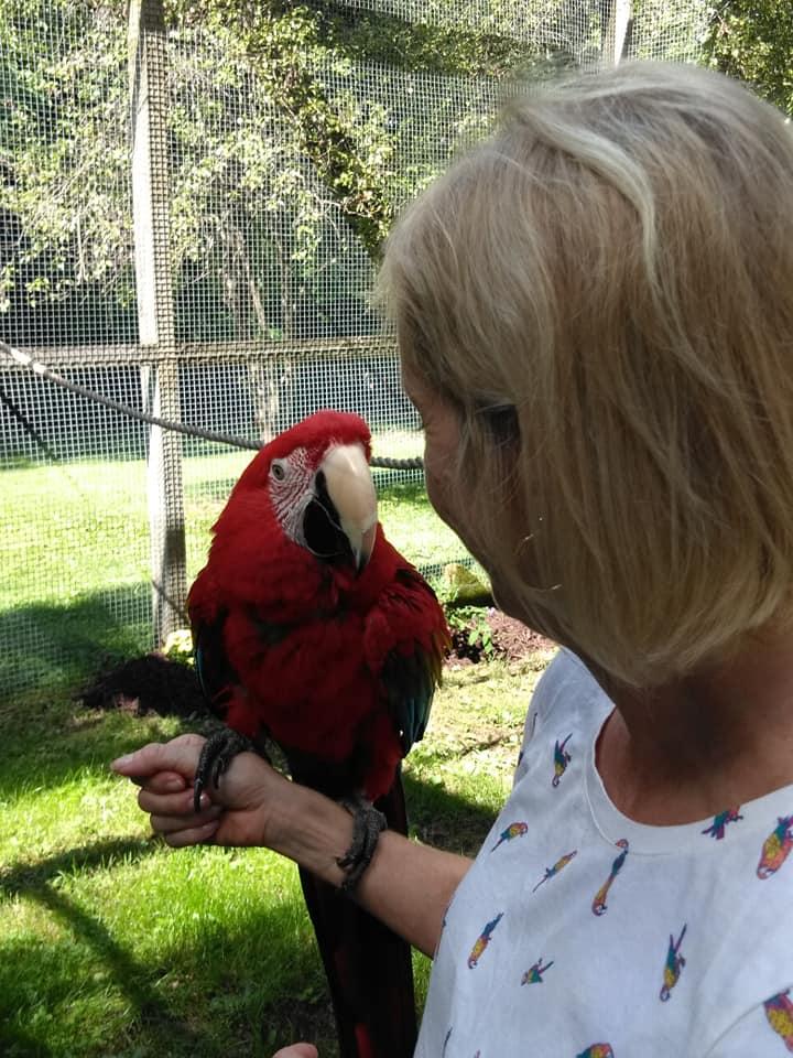maebs hope Jean macaw.jpg