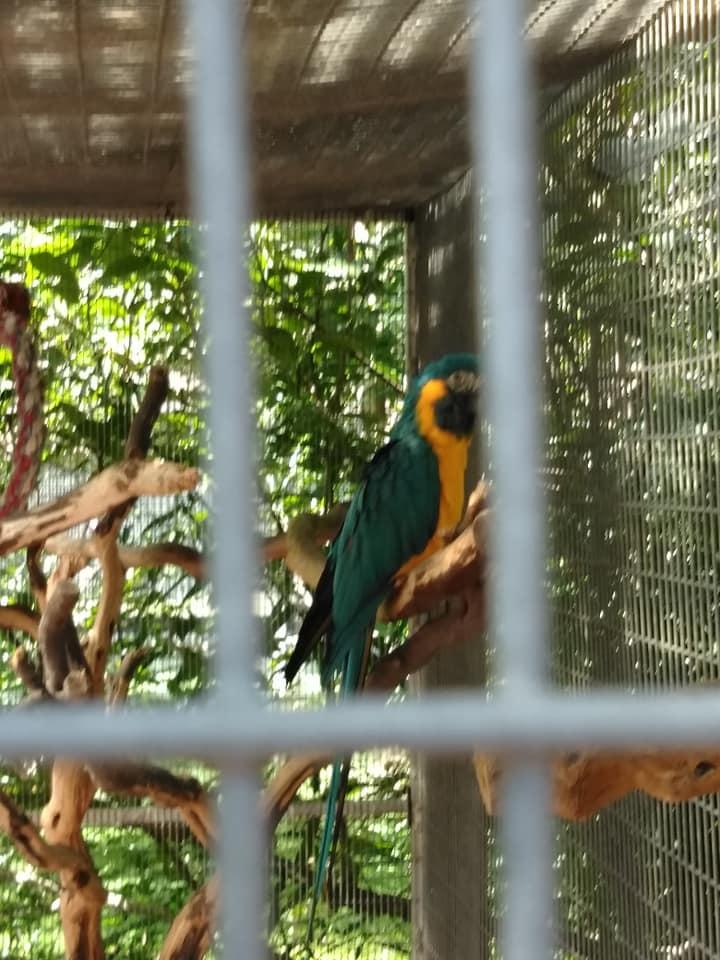 Maebs hope macaw 6.jpg