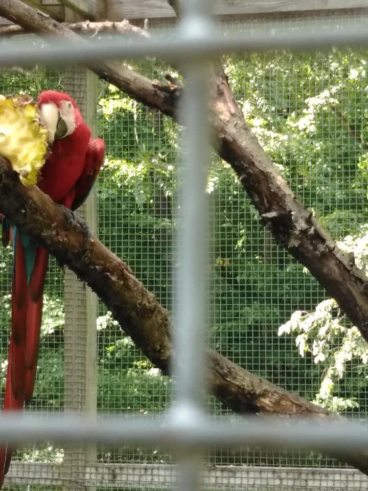 maebs hope macaw 5.jpg