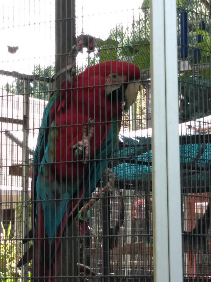 Maebs Hope macaw 3.jpg