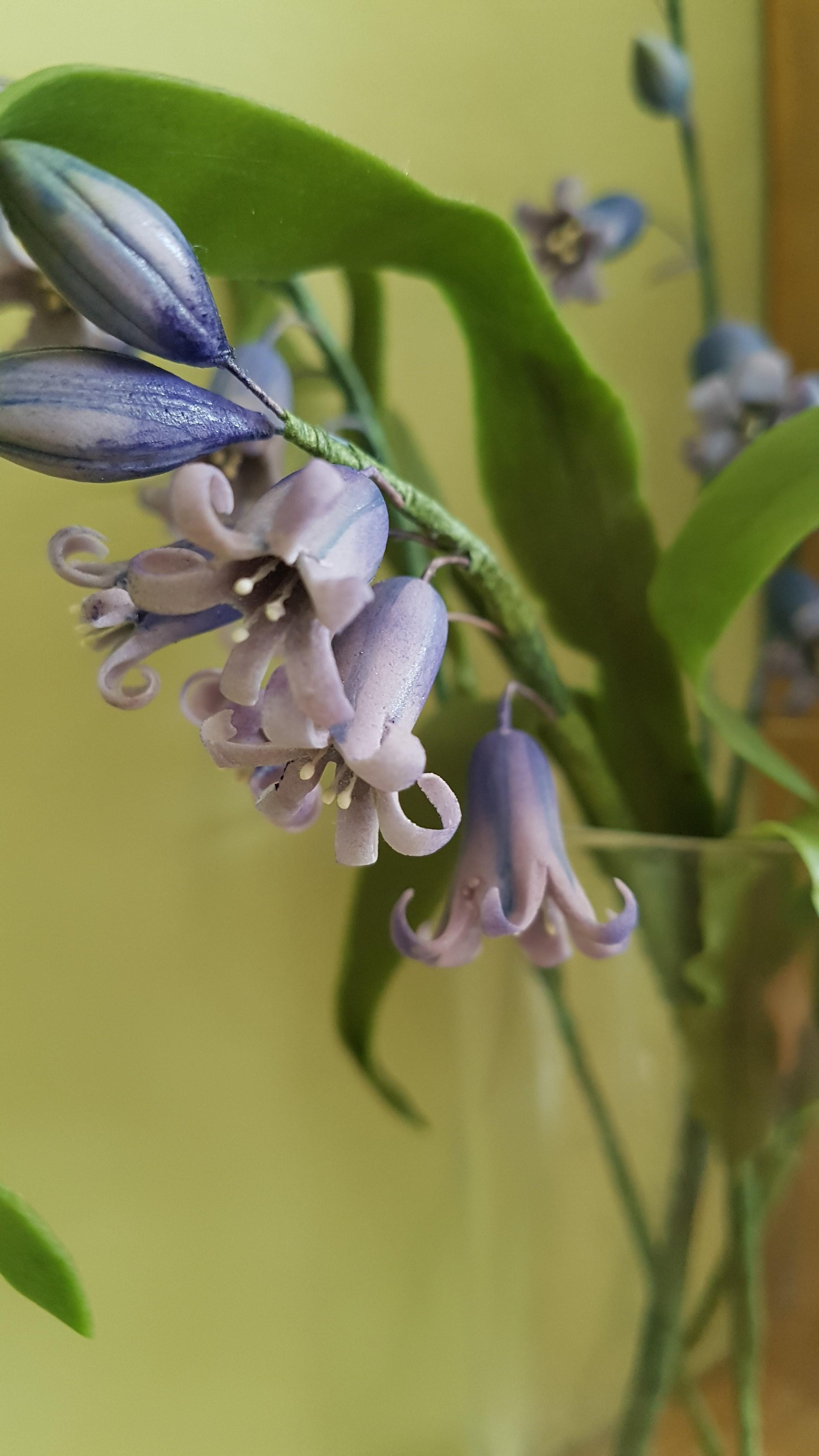 bluebells close up.jpg