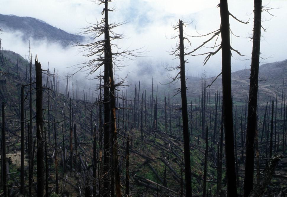burnt-trees.jpg