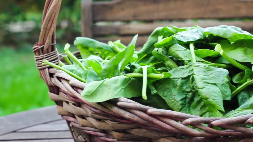 Spinach is loaded with nutrients and antioxidants!