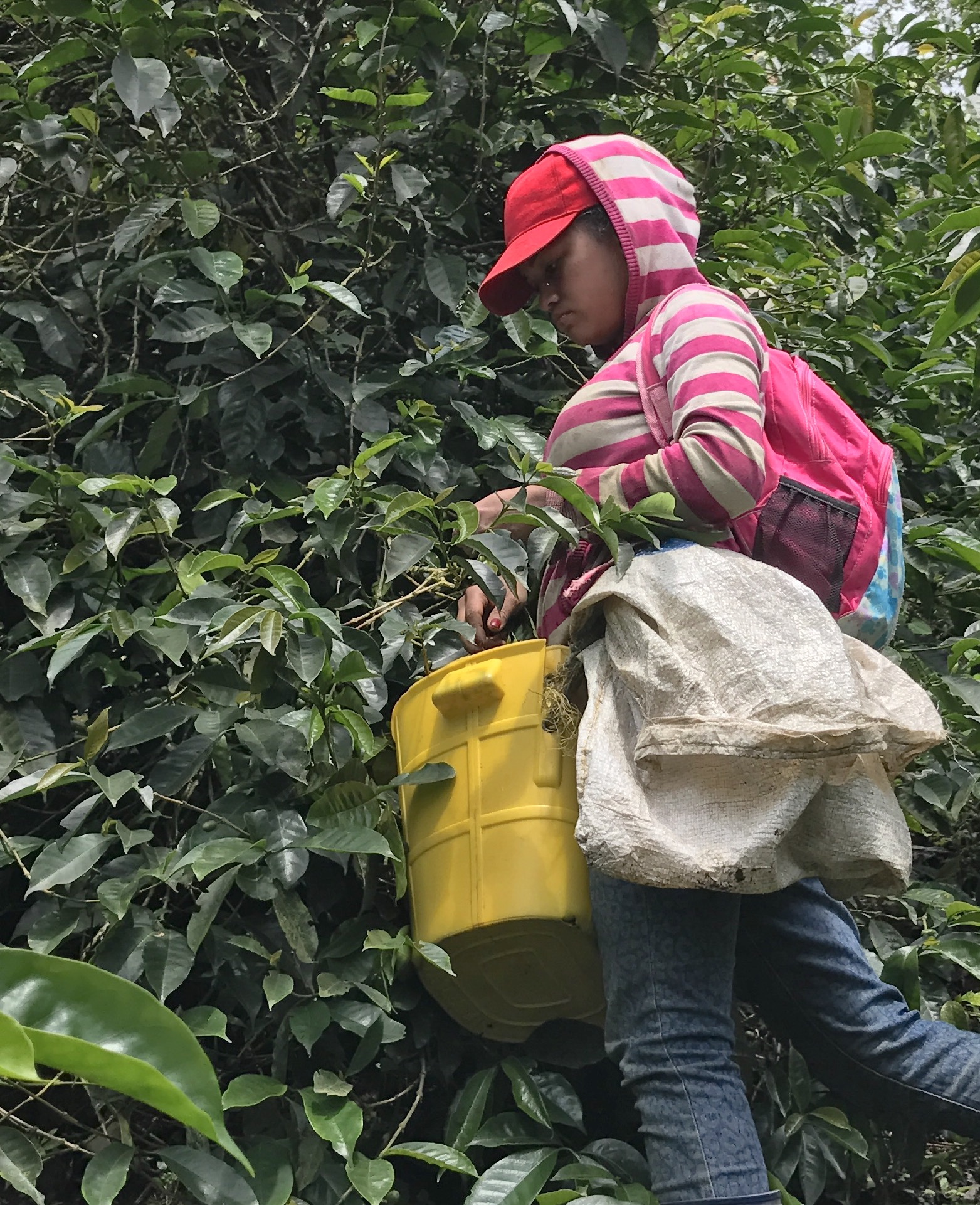 Coffee picker - Granja Esperanza, Colombia
