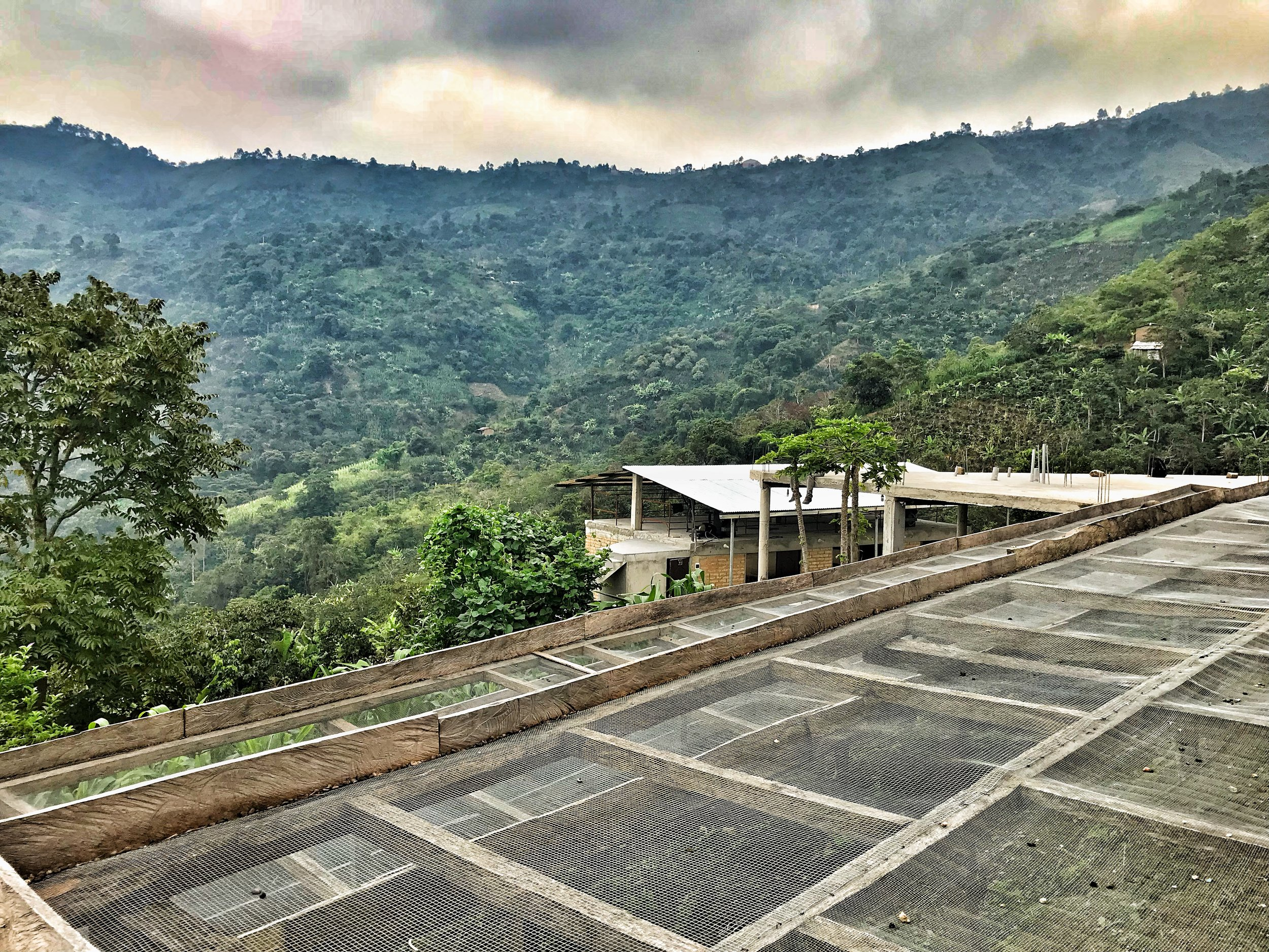 coffee drying beds - finca churupampa