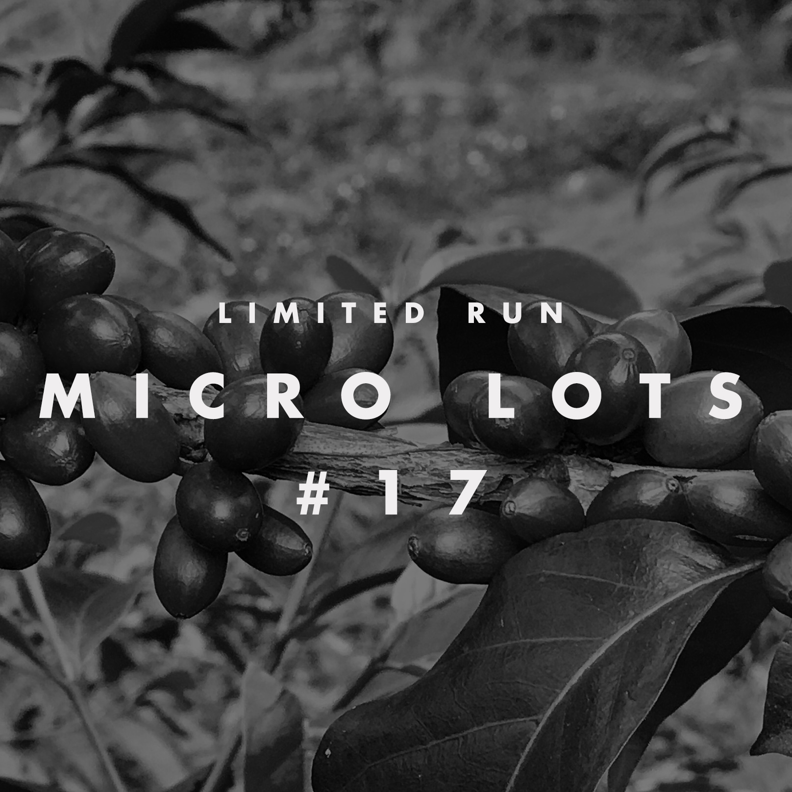 microlot2.jpg