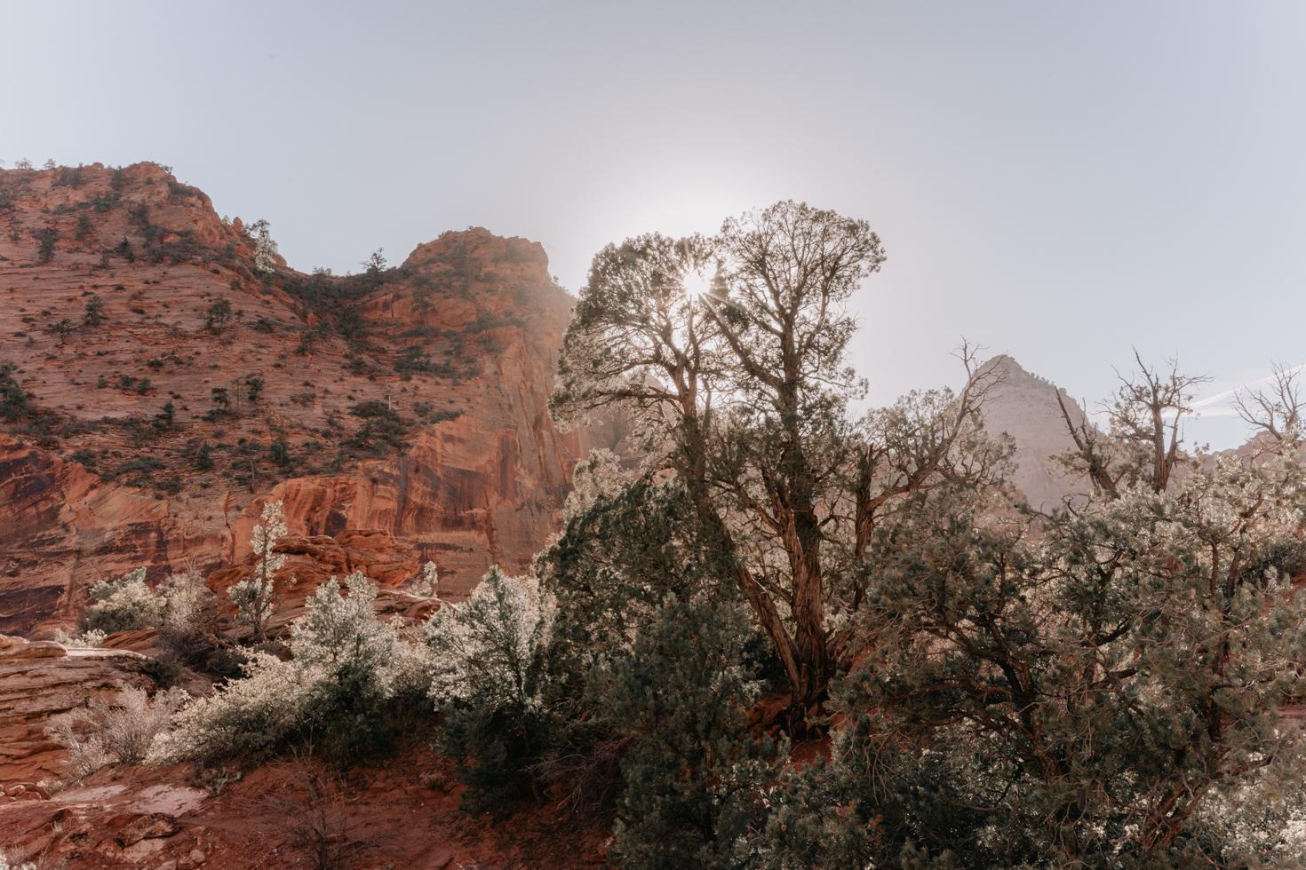 Zion National Park - Southwest Road Trip