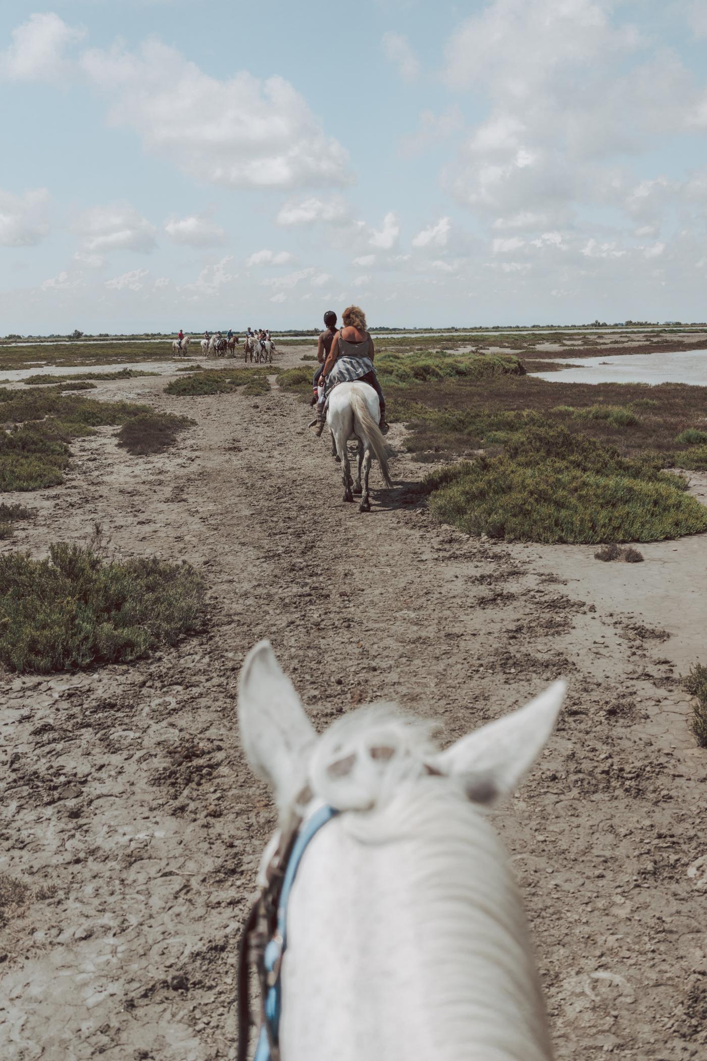 Horseback riding Camargue Horses