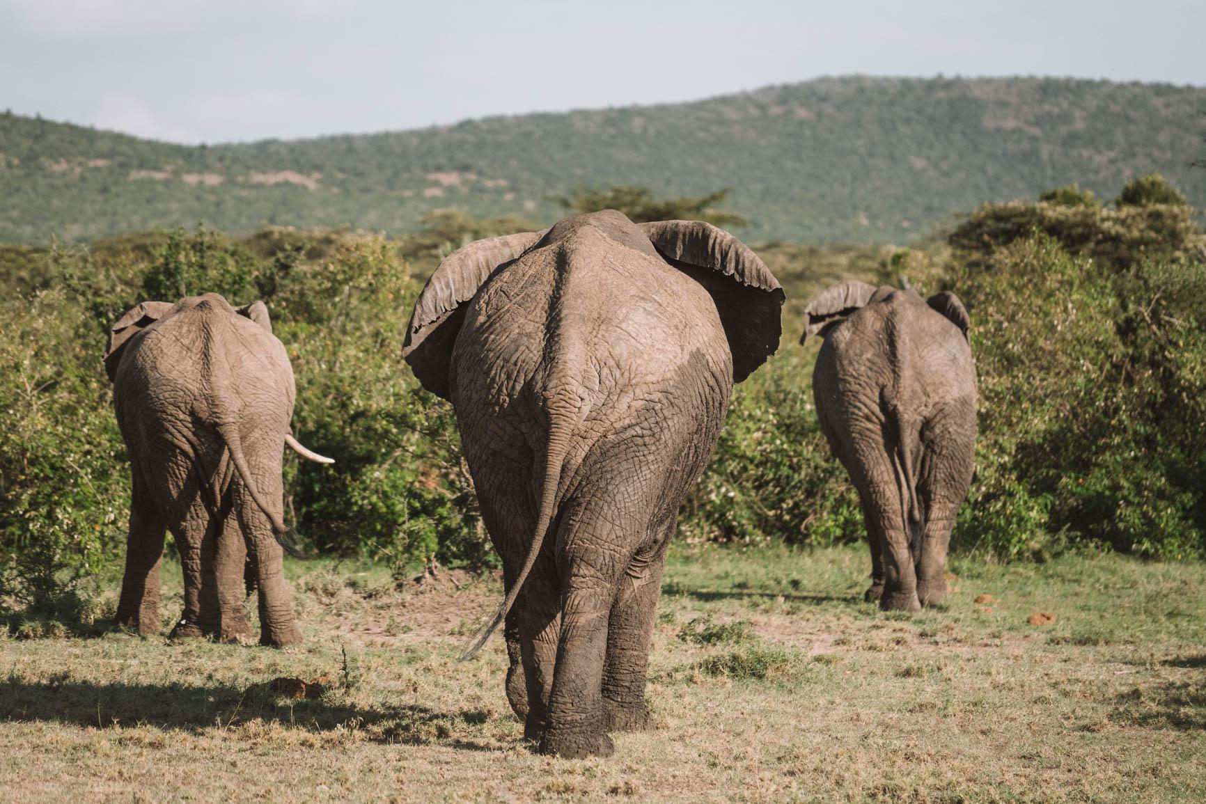 Kenya wildlife safari Maasai Mara