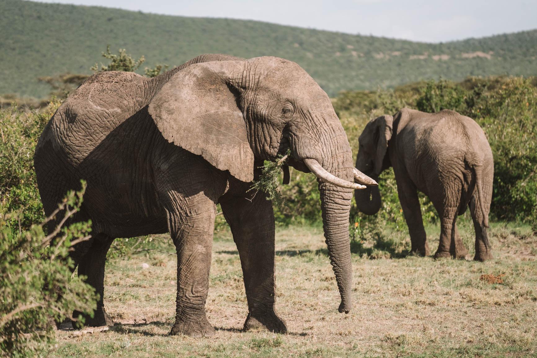 Kenya wildlife safari Luxury lodge Maasai Mara Kenya Africa #Safari #Kenya