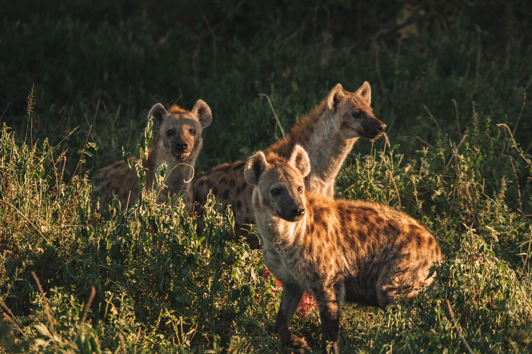 Kenya wildlife safari Maasai Mara Big 5 Luxury lodge