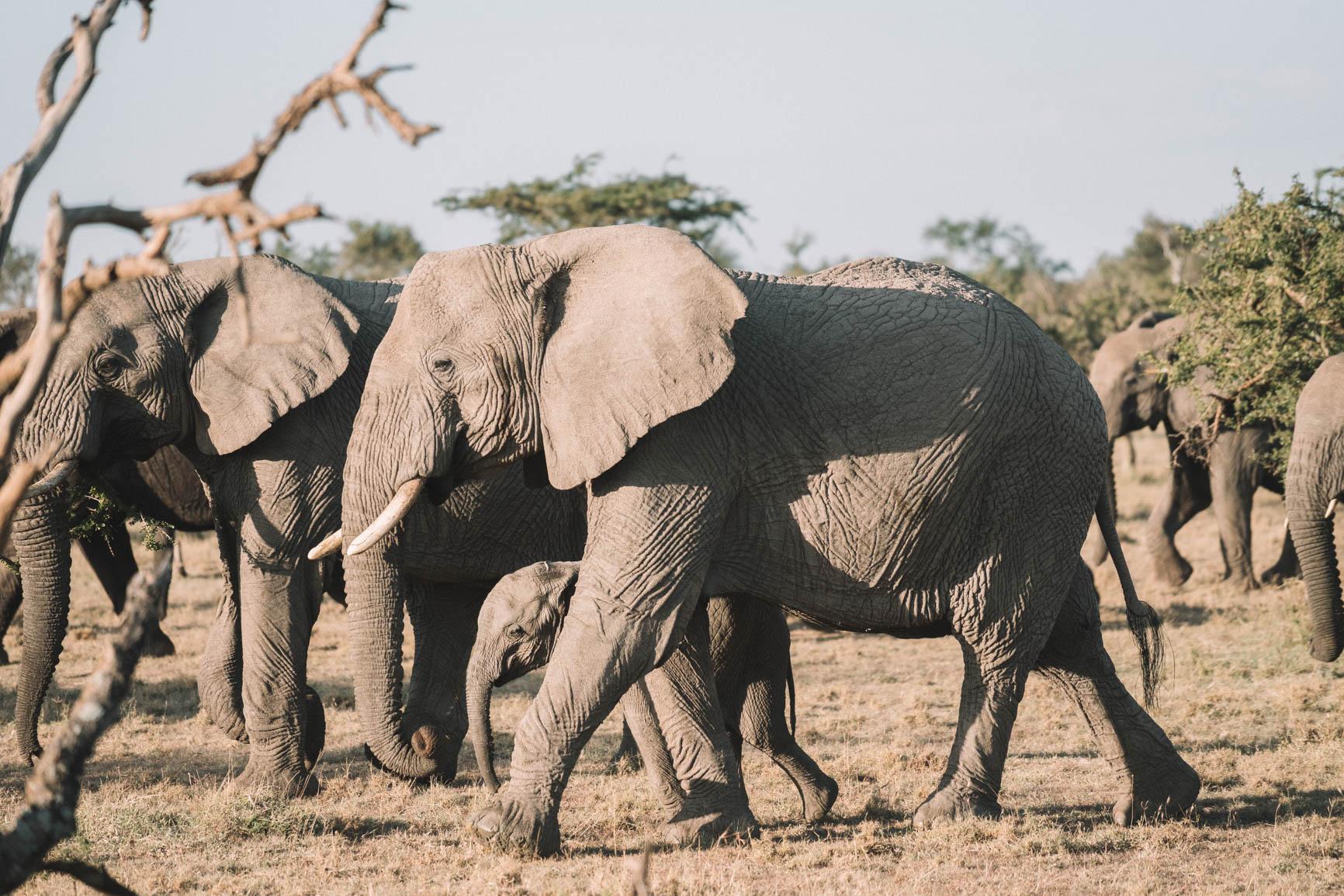 Elephant Kenya wildlife safari Maasai Mara Big 5 Luxury lodge