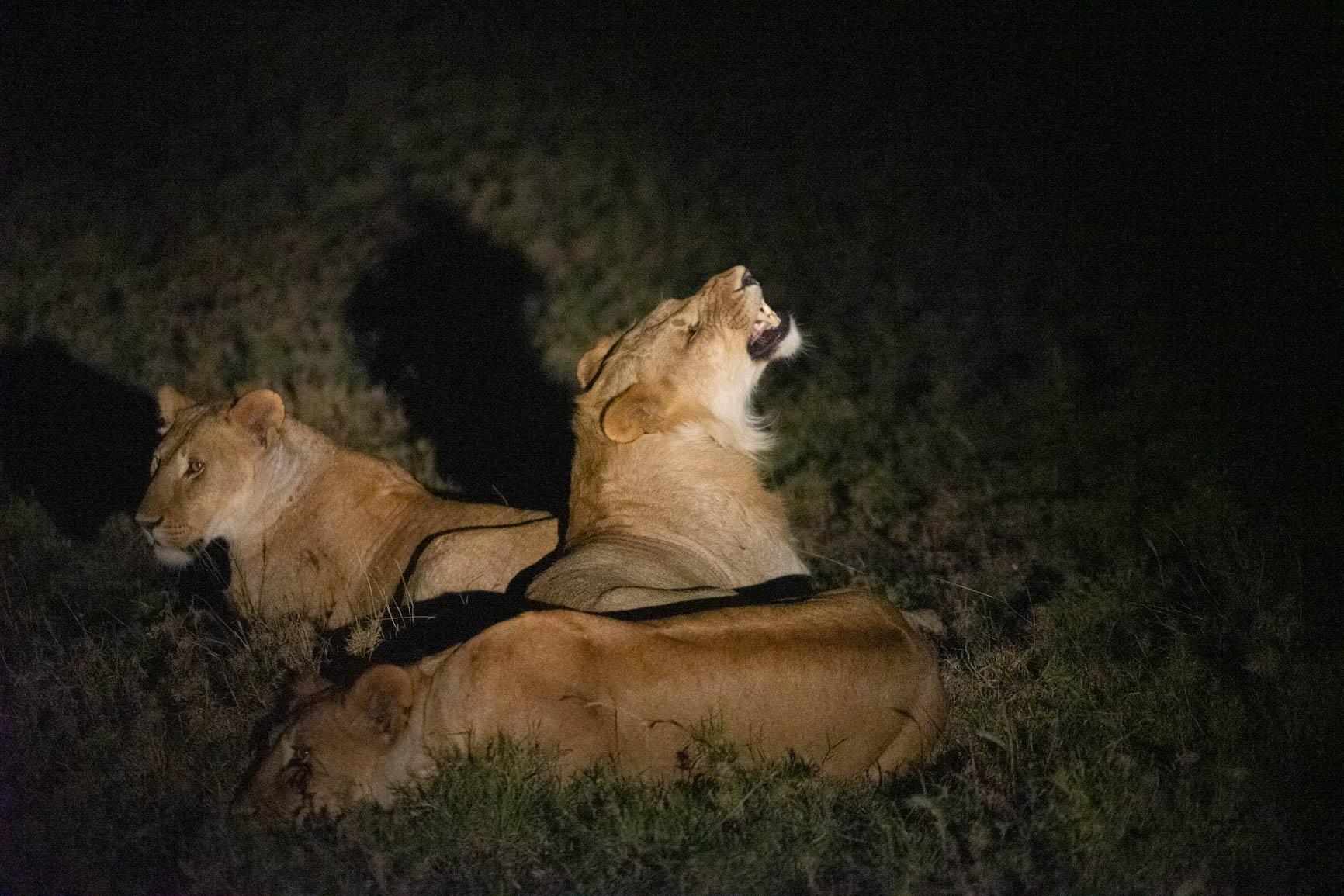 Kenya wildlife safari night game