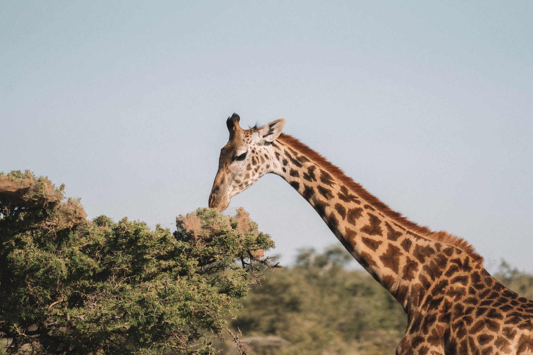 Everything you need to know before your safari trip to Kenya and Tanzania