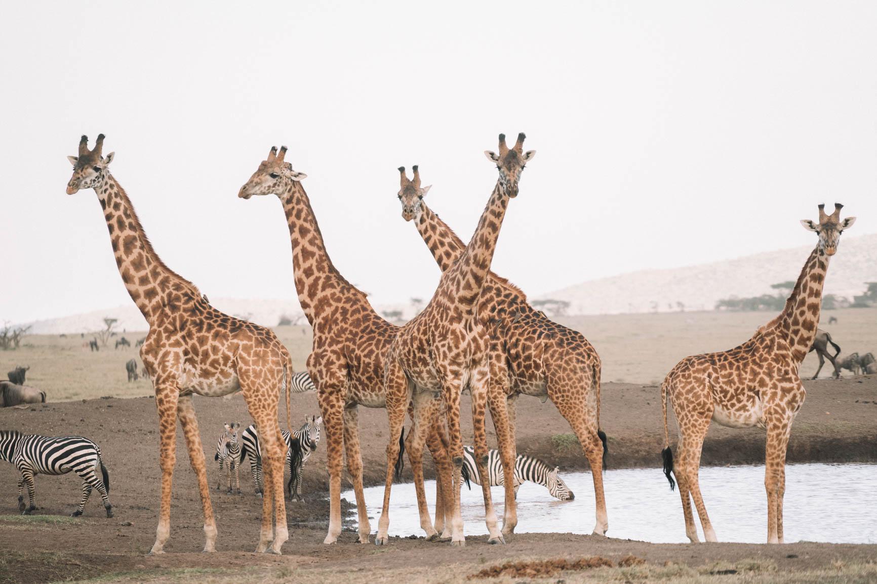 Private conservancy vs National reserve Wildlife Safari