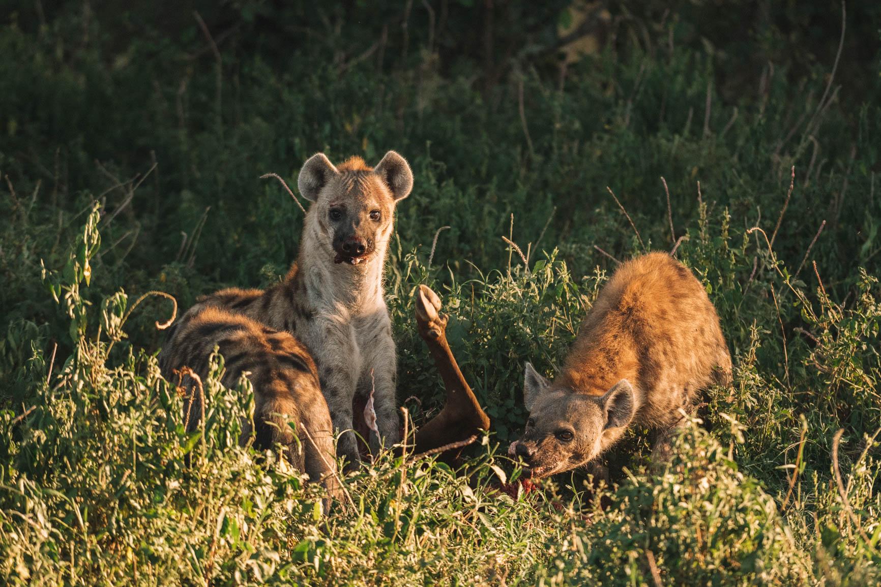 Private conservancy vs National reserve Wildlife Safari comparison