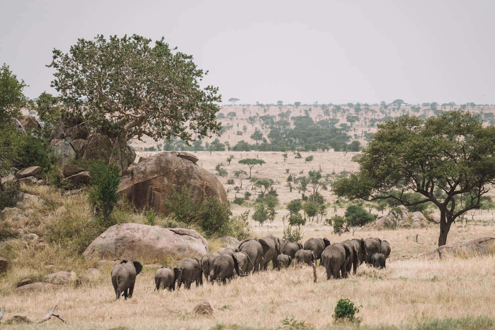 Kenya and Tanzania Safari tips and recommendations