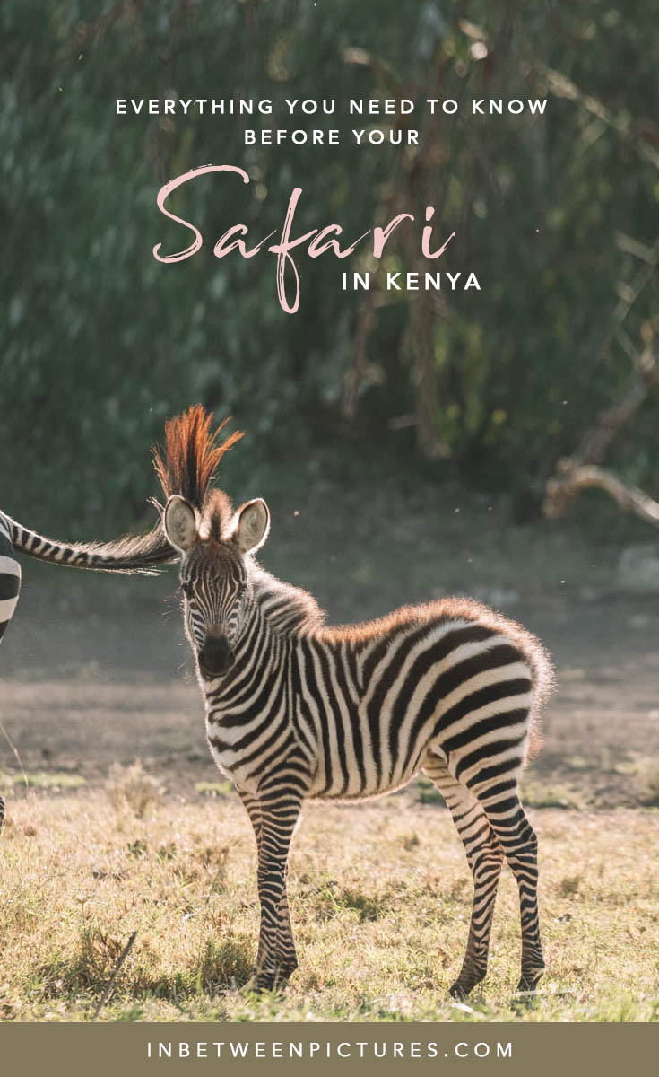 Everything you need to know before your Safari in Kenya - Tips, Recommendations, FAQ and guide to help you plan the perfect wild life safari in Africa #Kenya #Africa #Safari - Maasai Mara Adventures