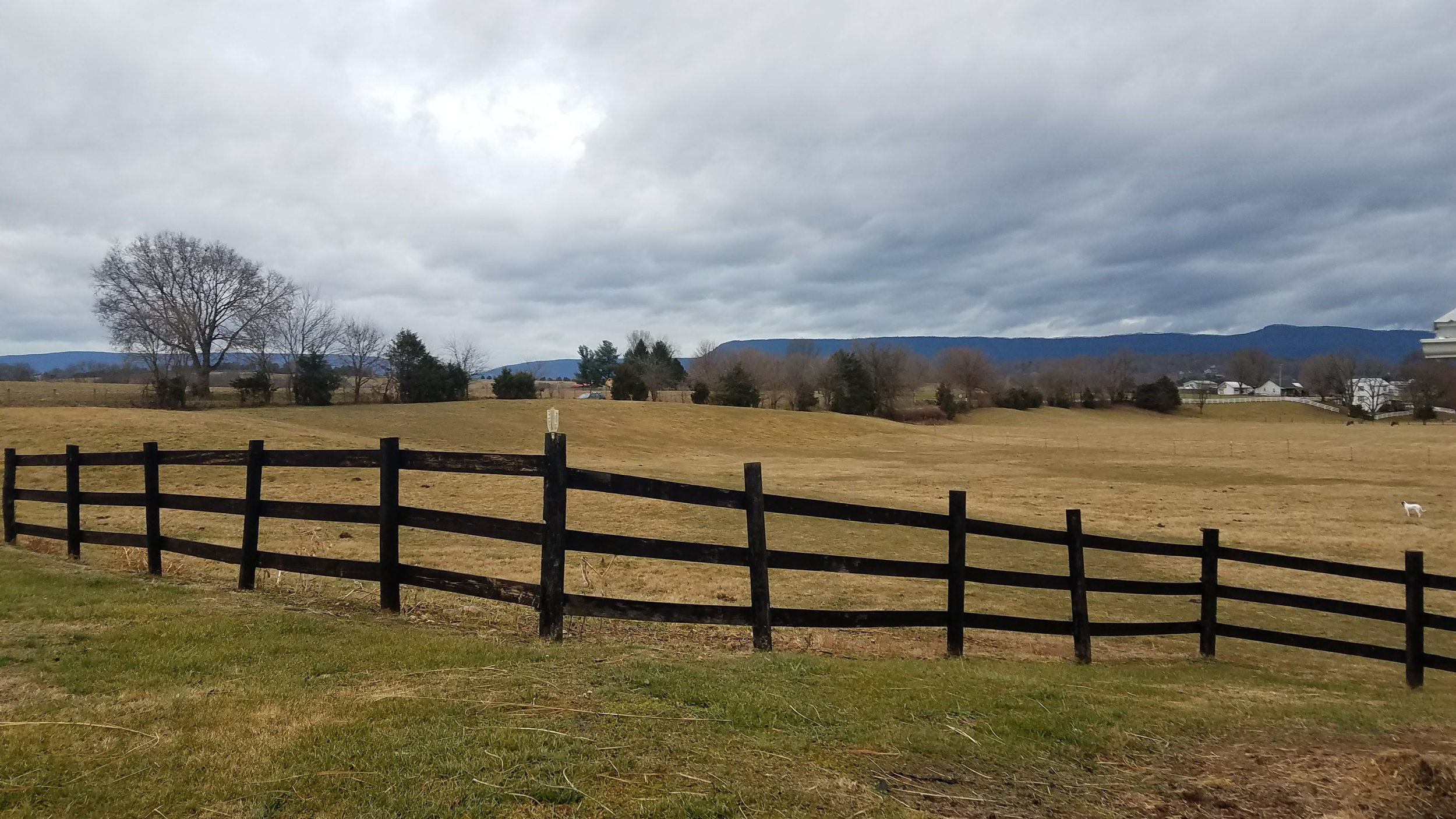 Pasture at Ravens Roost Farm