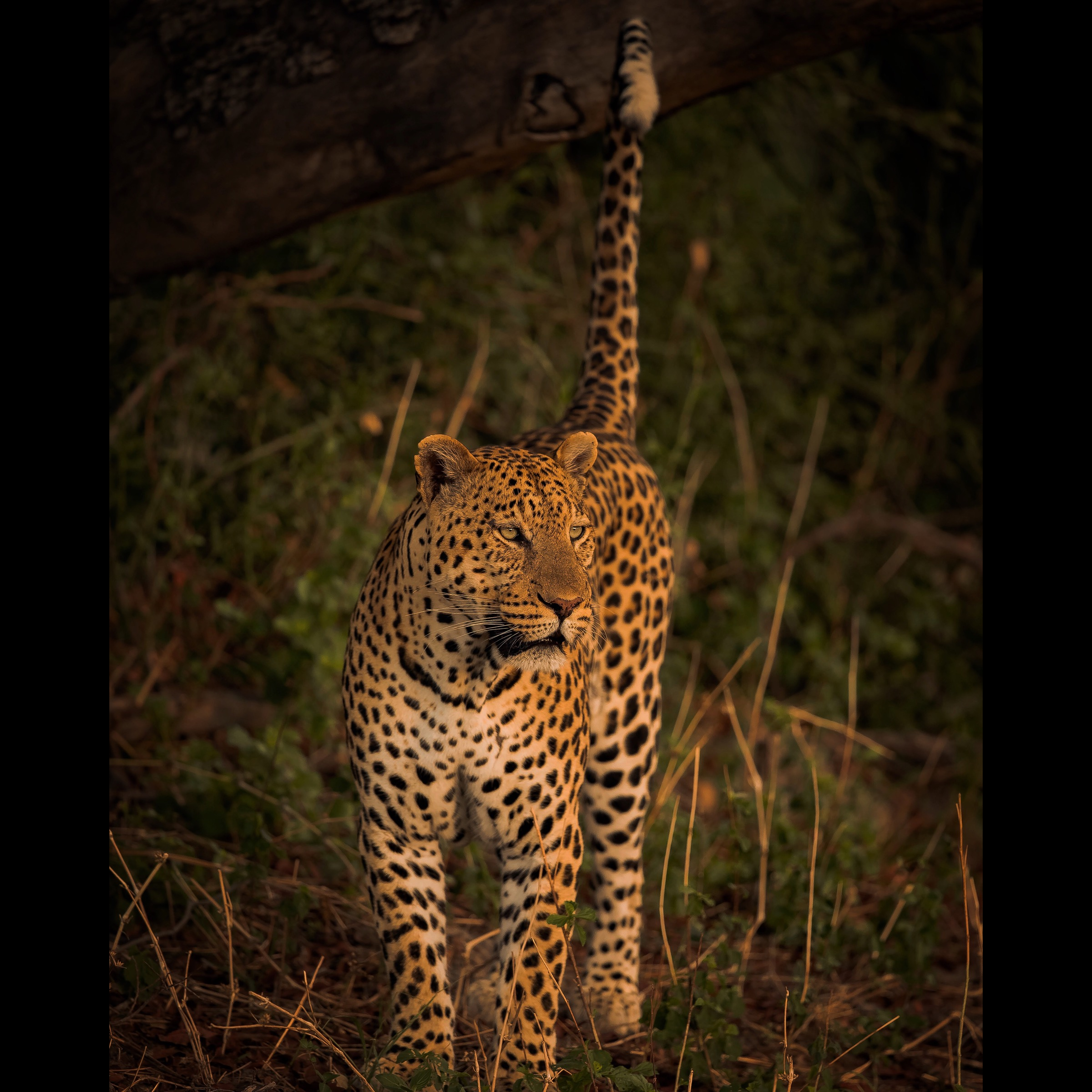 Golden Hour in the Moremi Game Reserve