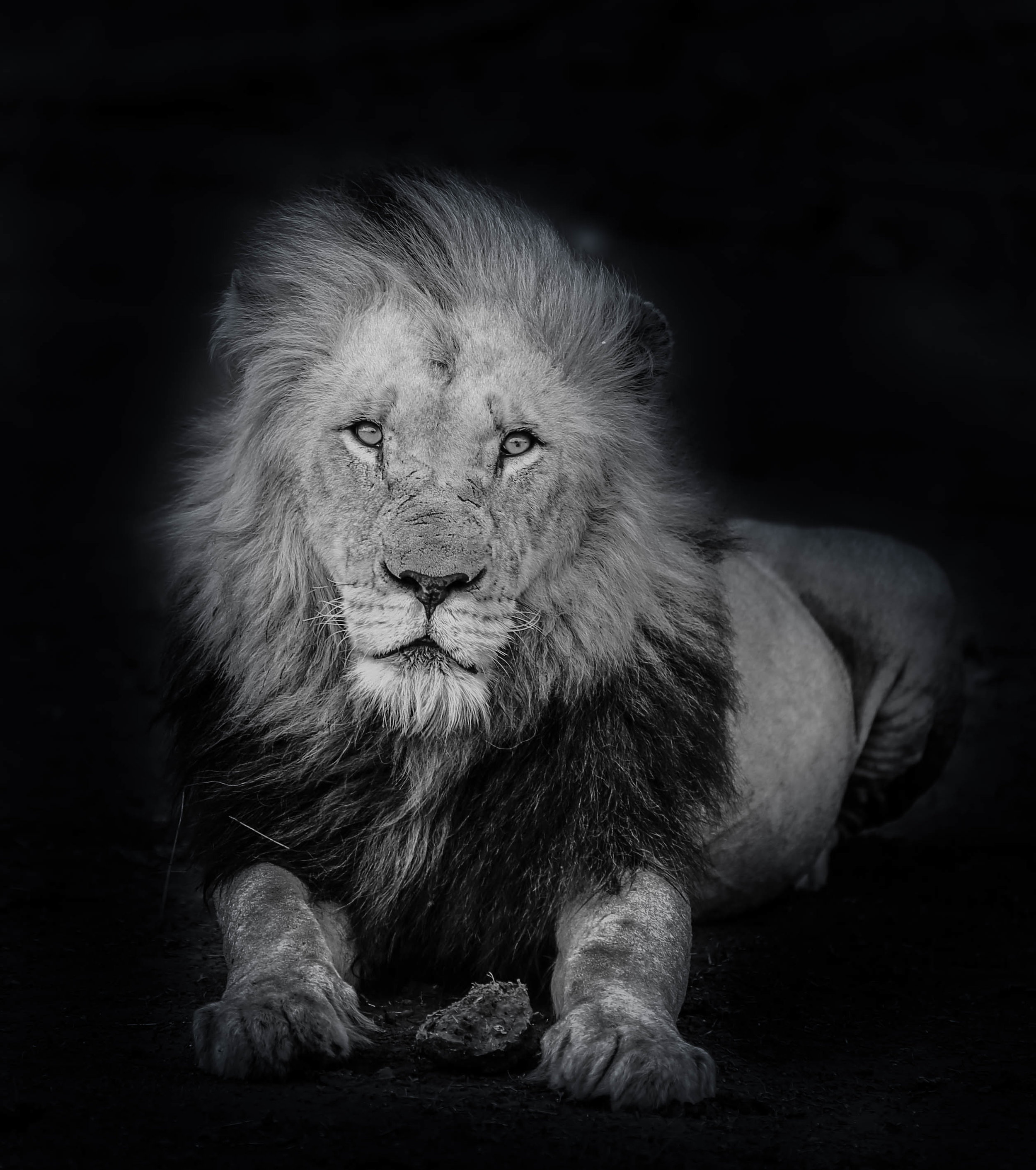 The King in B&W