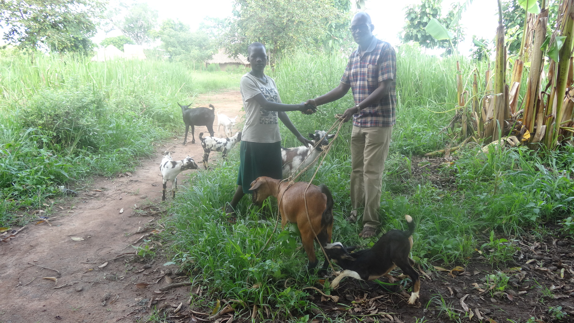 Total orphan now has 6 goats of her own (June 2019) - She is only 15 and a total orphan in Puranga Pader district. She was graduated from the project in June 2019 with 6 goats. Now, she and her 2 siblings have means of paying for school.