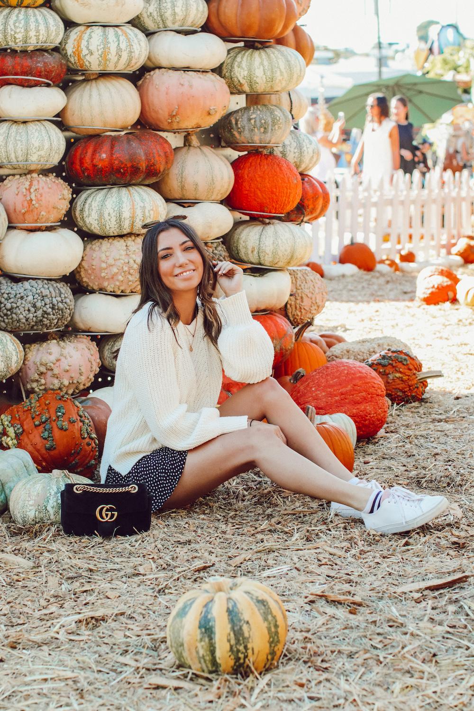 Tara Michelle Pumpkin Patch