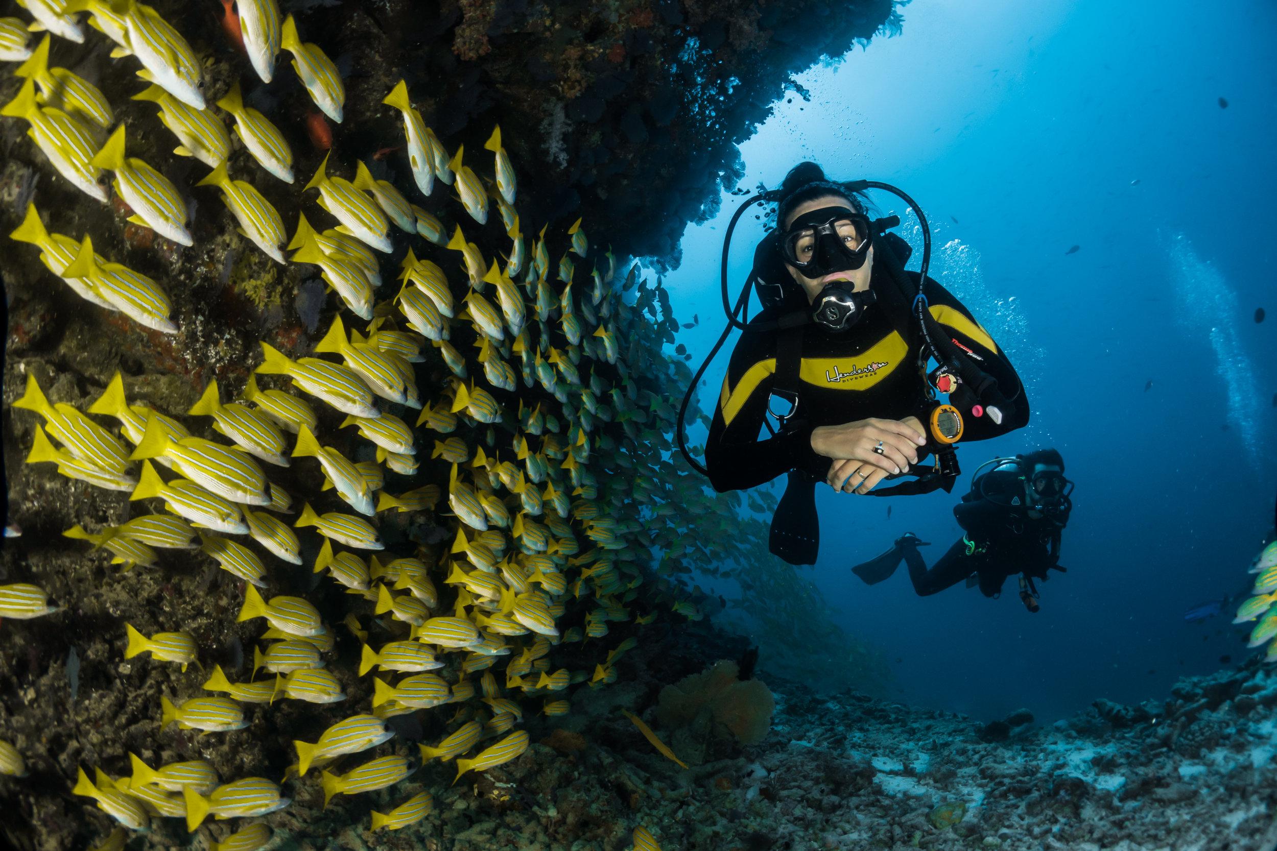 Mache deinen Tauchschein auf Cozumel und entdecke die wunderschöne Unterwasser-Welt