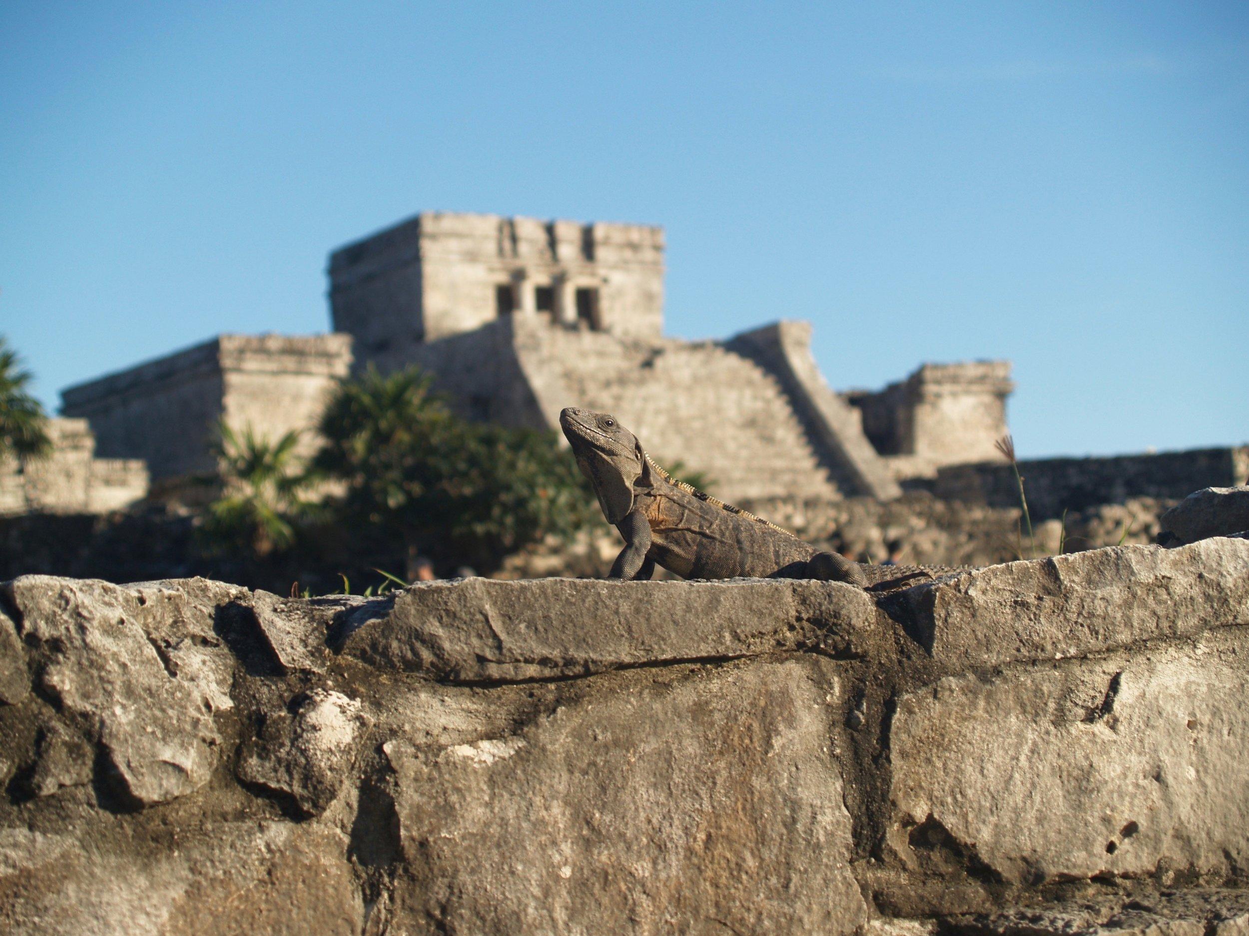Die Maya-Ruinen von Tulum