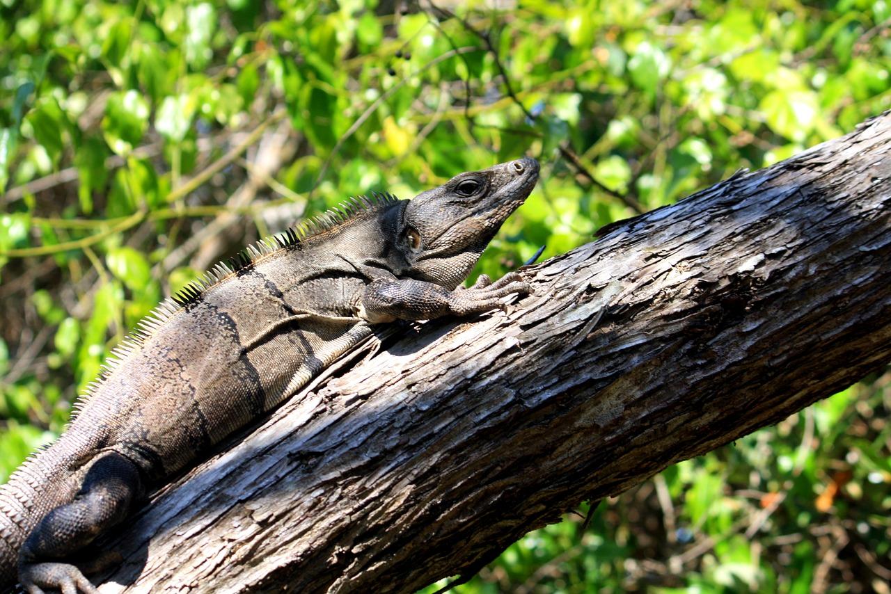 Durch die Mangroven der Isla Holbox