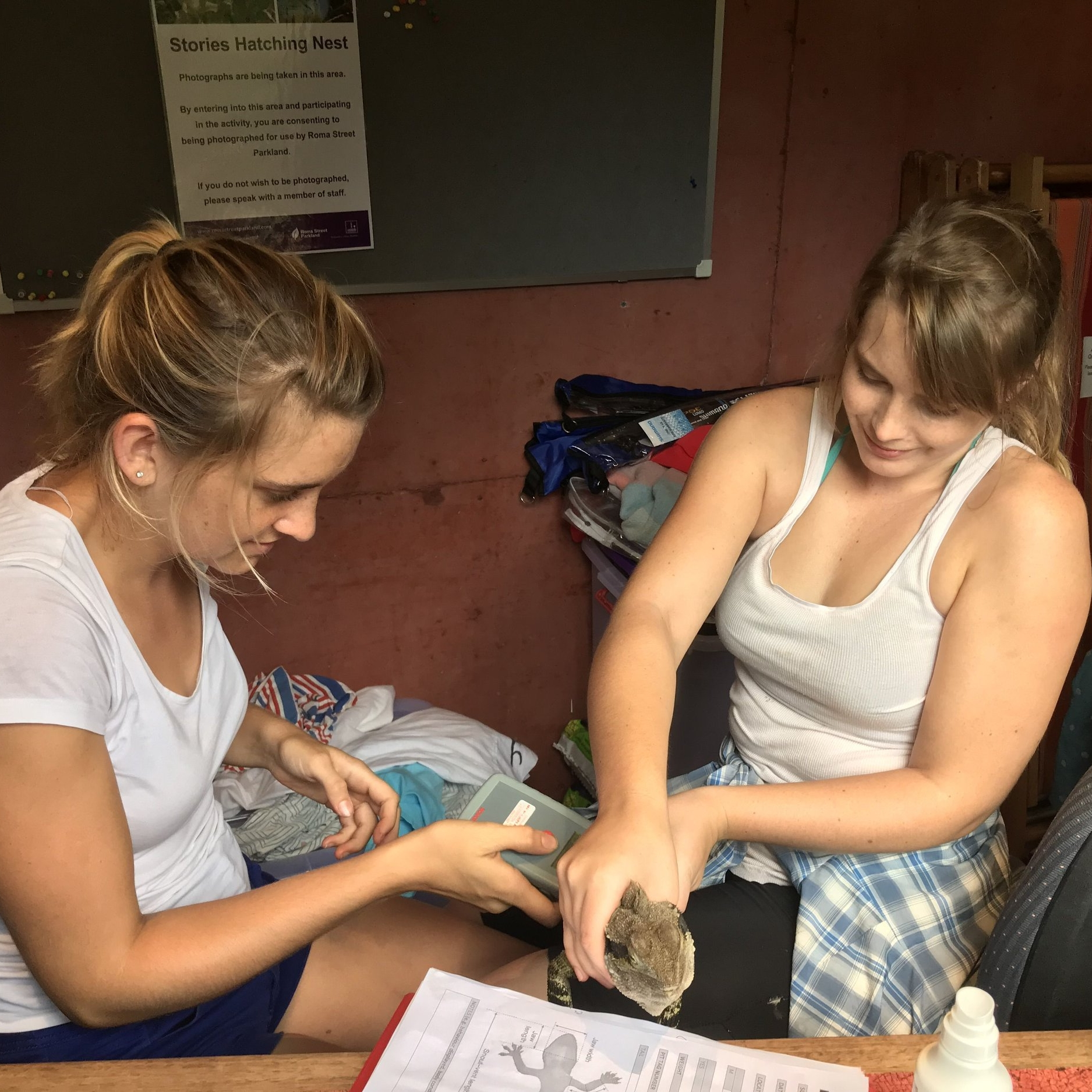 Nicola (left) and Sarah (right) checking for a microchip in a dragon.