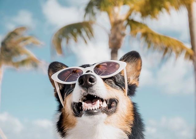 We see you, long holiday weekend ahead. #happymemorialweekend #seeyewear 📷 @seeeyewear @taylor_featherstone