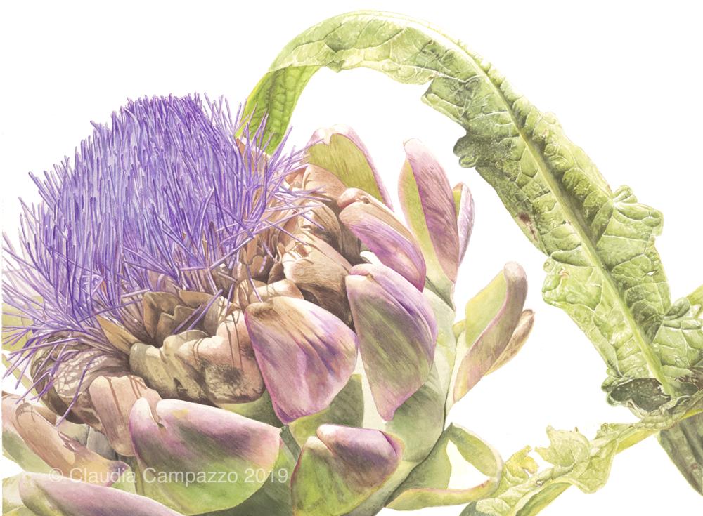 Artichoke in Flower