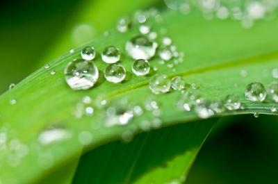raindrops_leaf.jpg