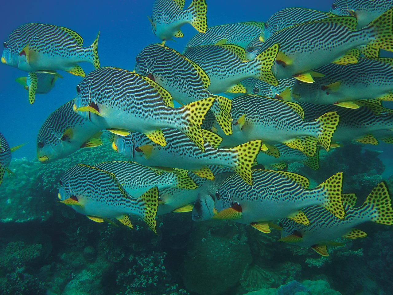 fish-swarm-432821_1280.jpg