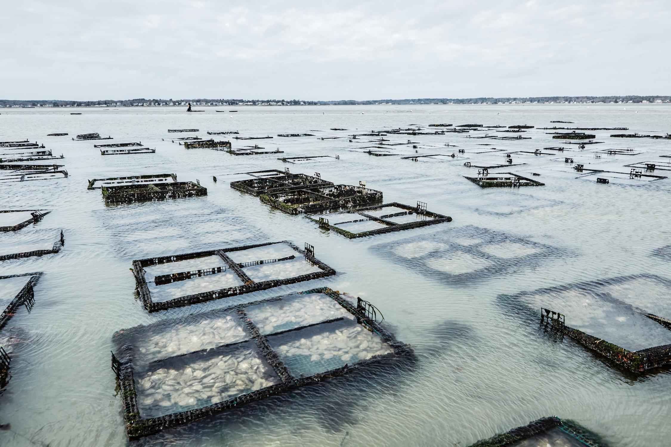oysters_7.jpg