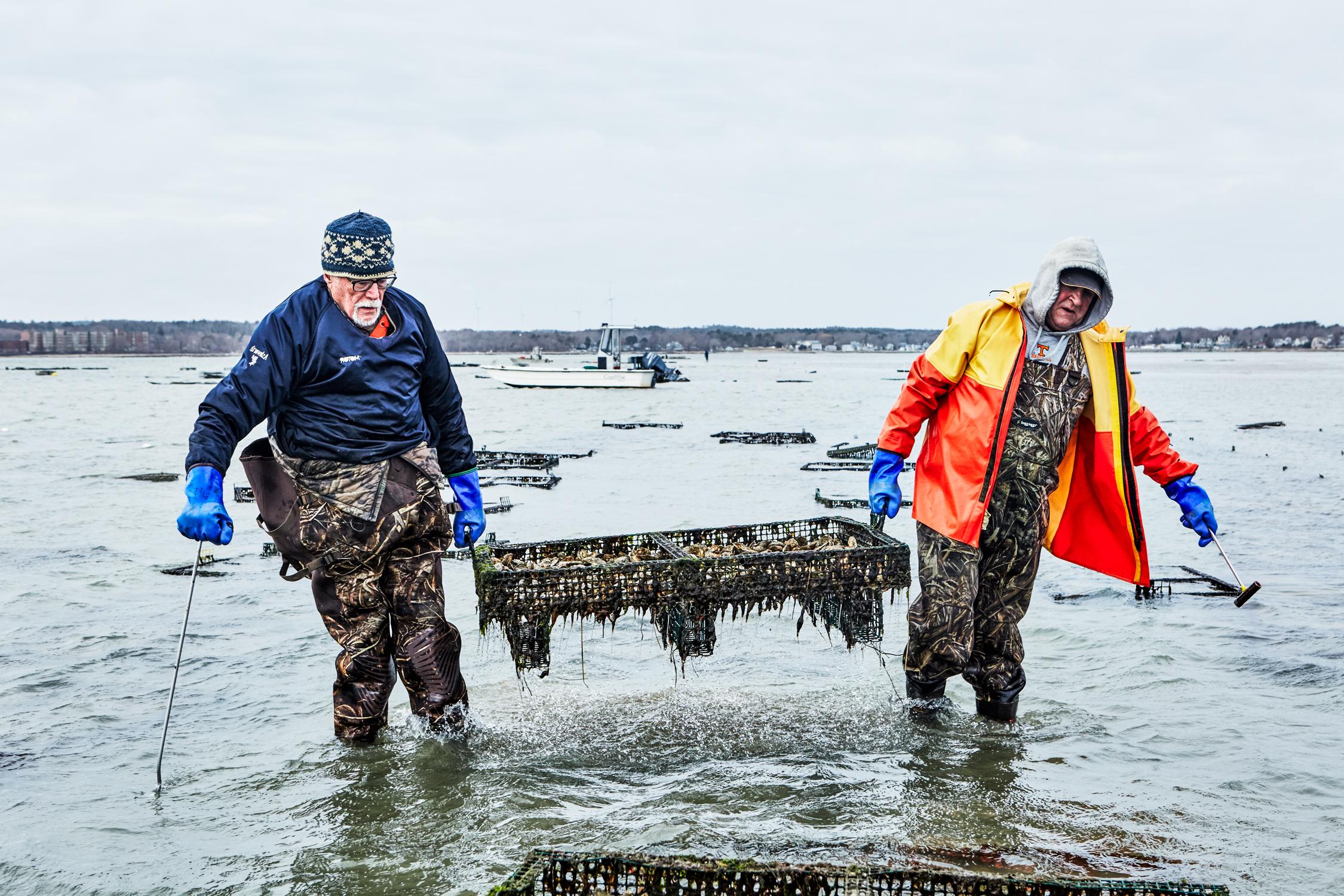 oysters_9.jpg