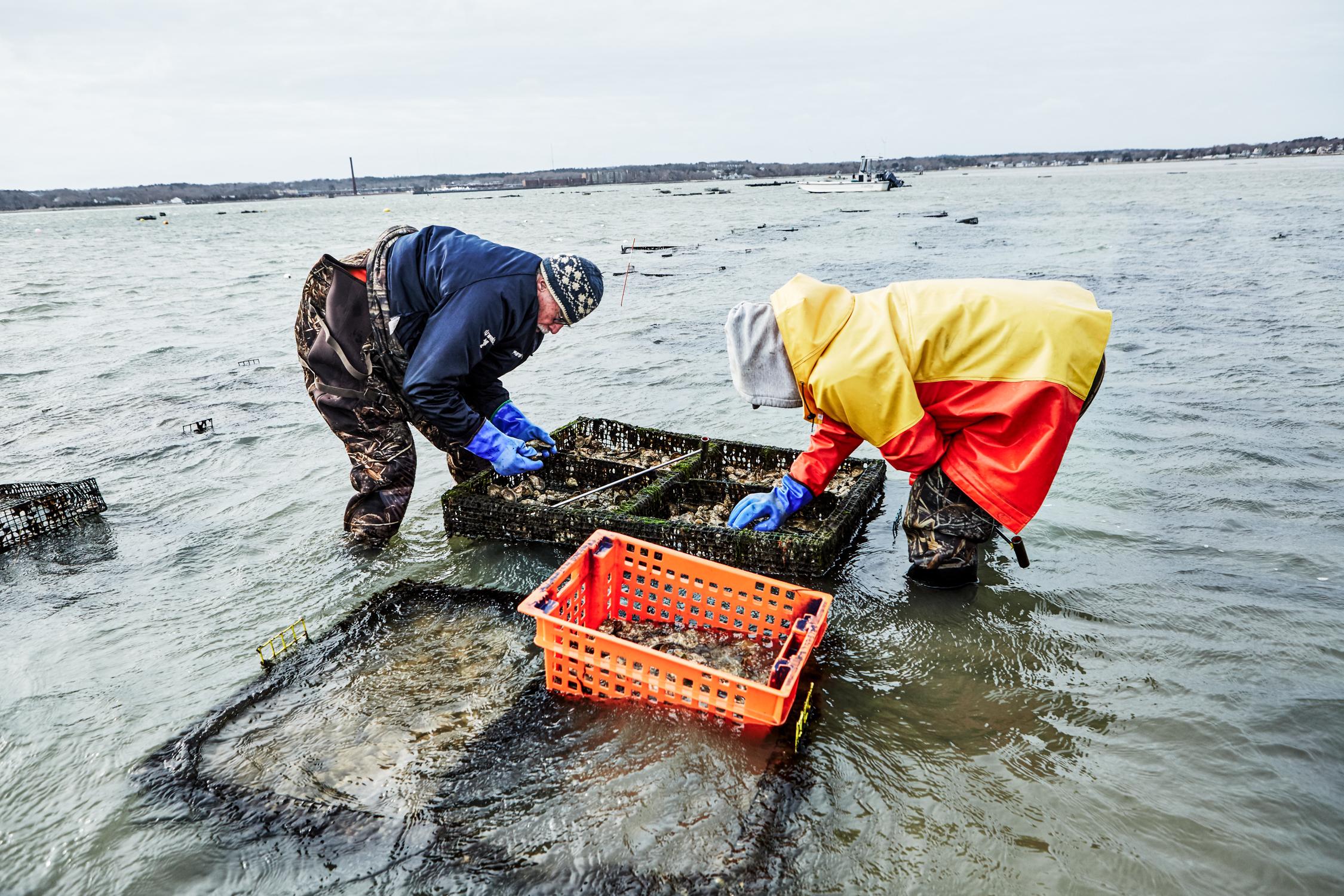 oysters_11.jpg