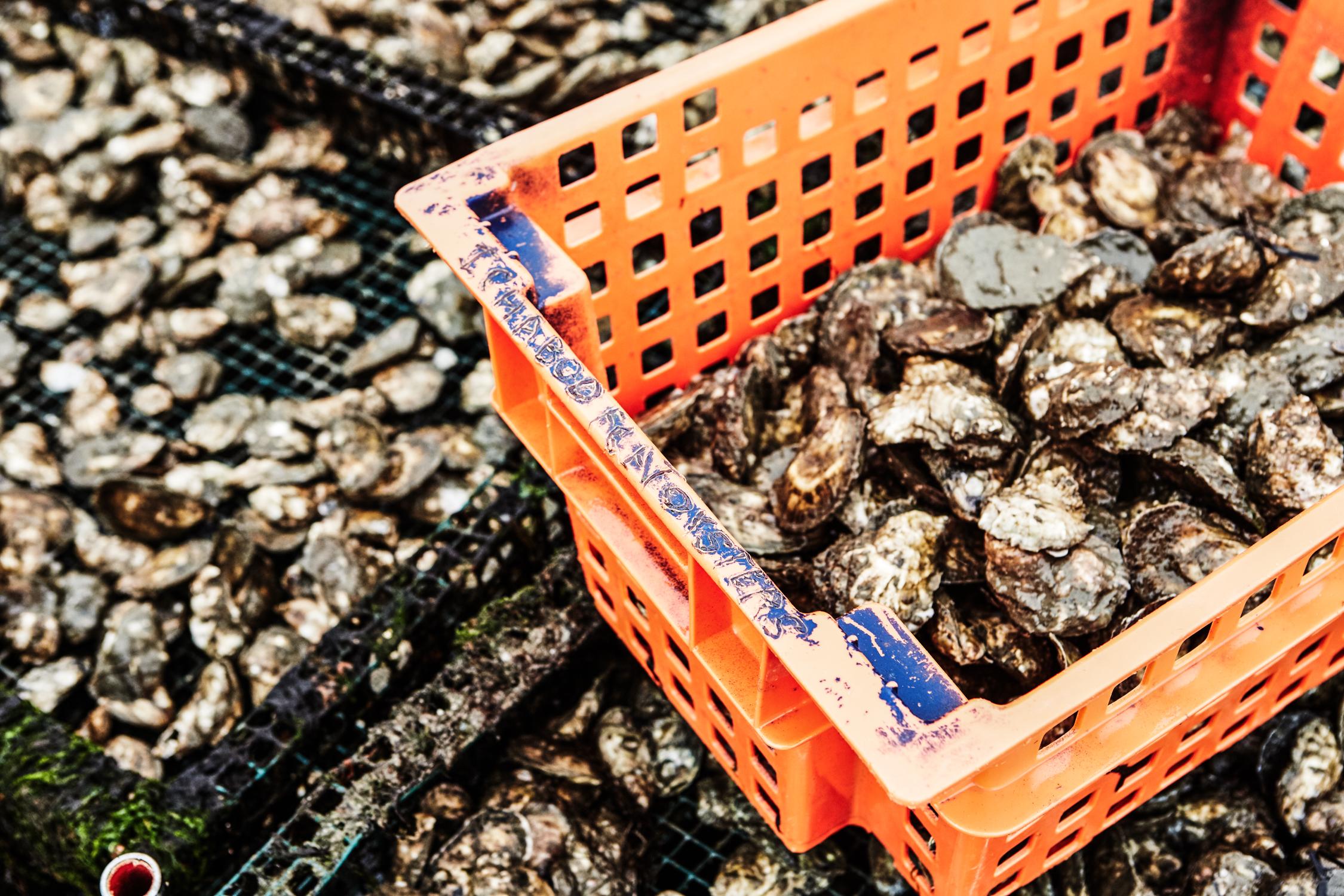 oysters_12.jpg