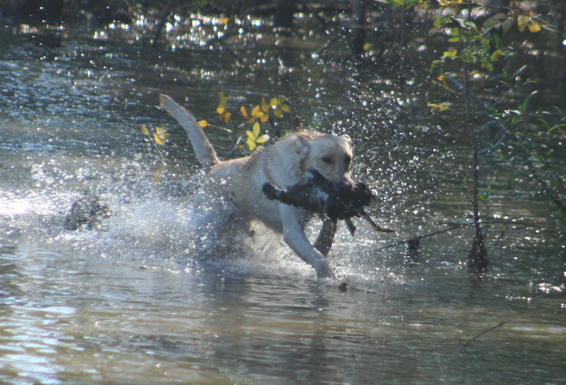water dog.JPG