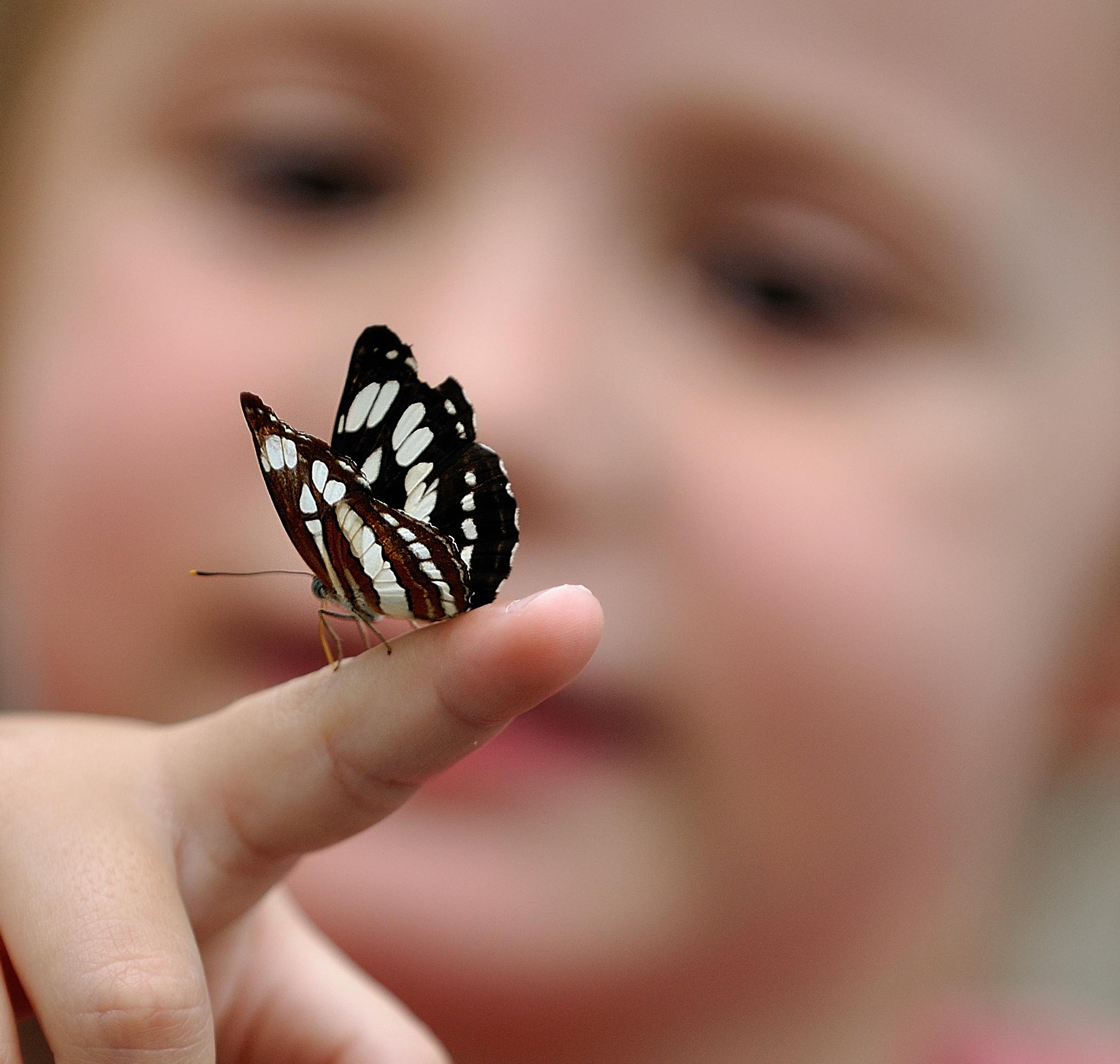 butterflyfingermay2010.jpg