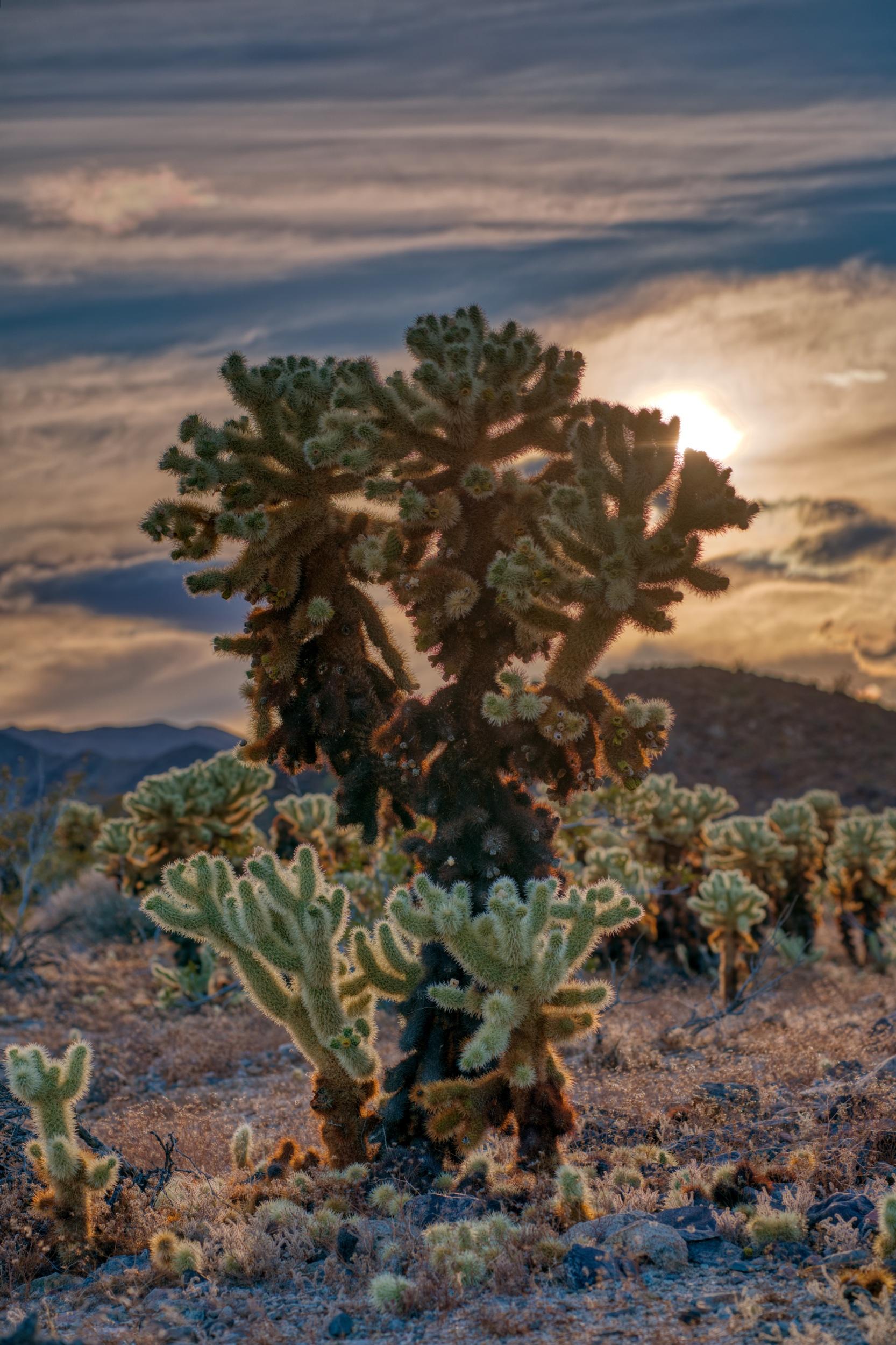 Joshua-tree-5-23-19-12624.jpeg