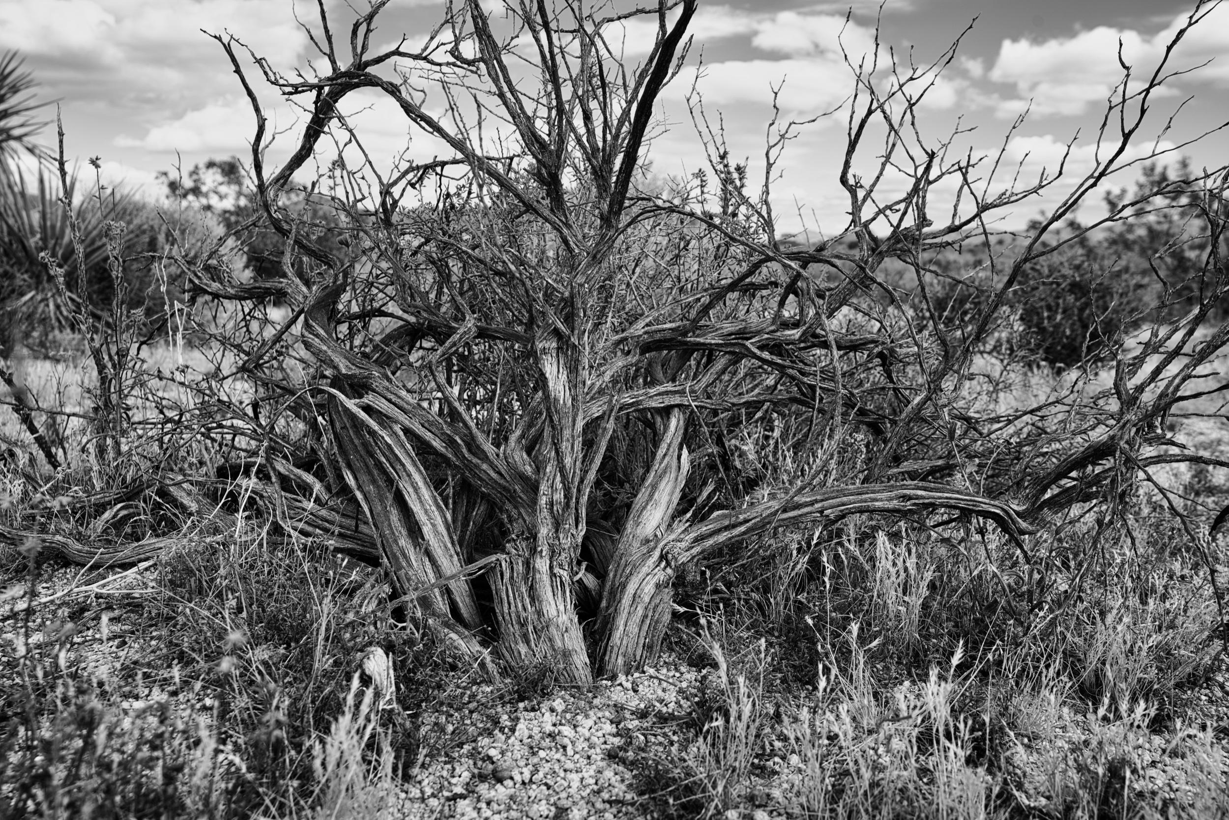 Joshua-tree-5-23-19-12376.jpeg