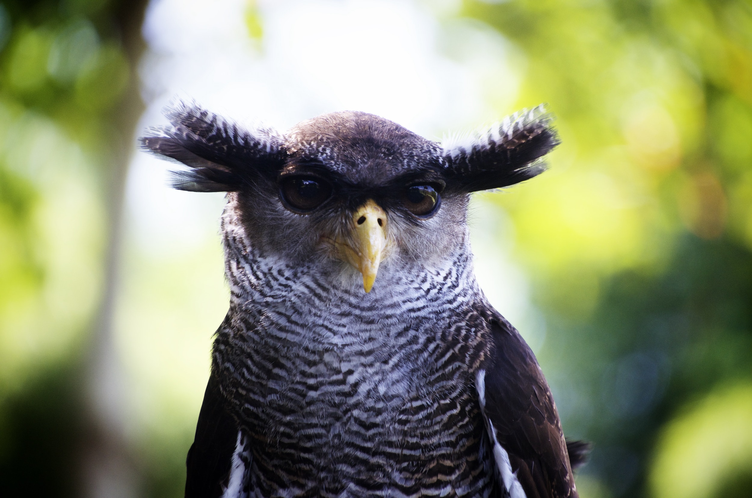 owl-close-up-bird-head (1).jpg