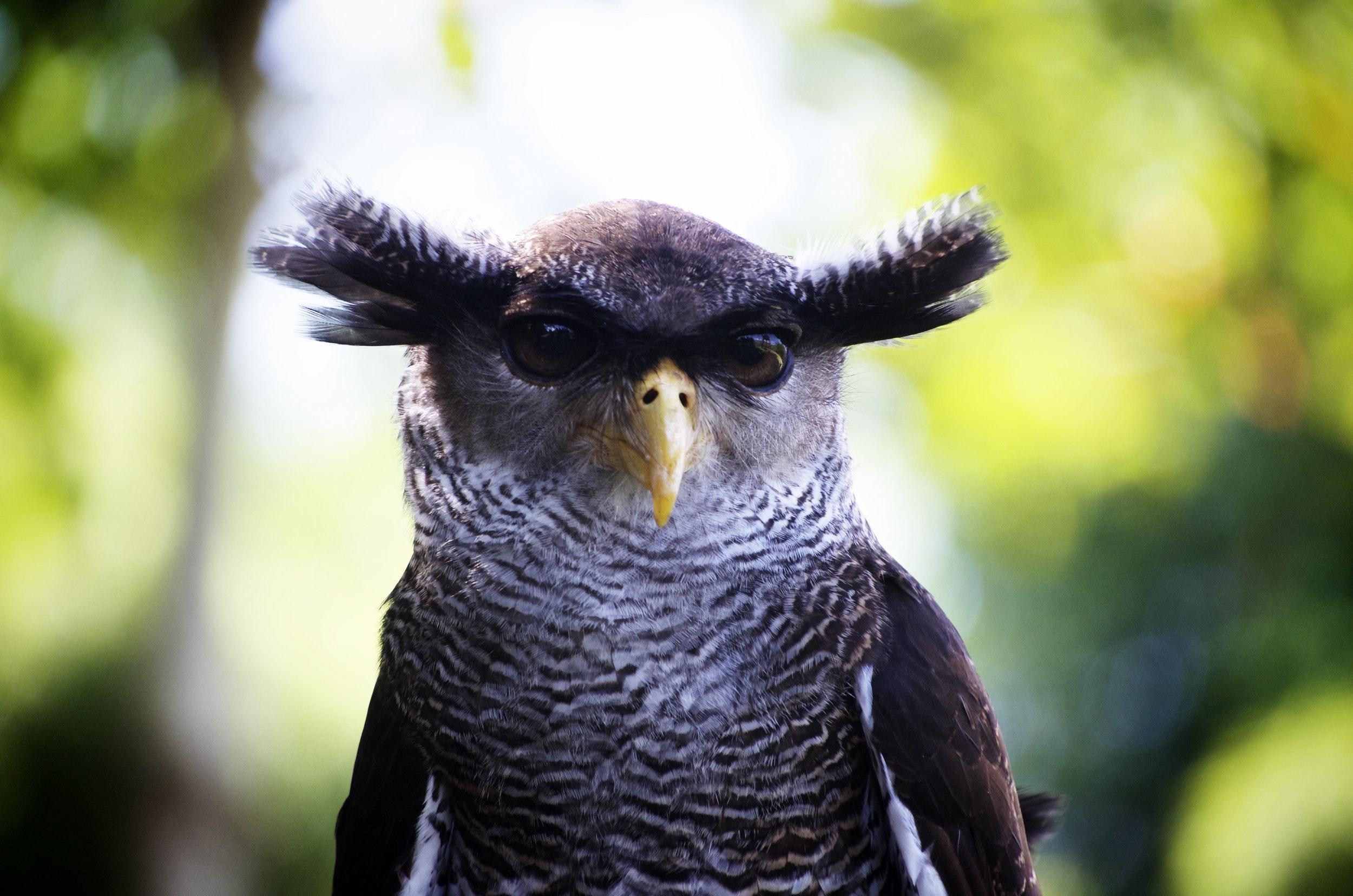 owl-close-up-bird-head (1).jpg